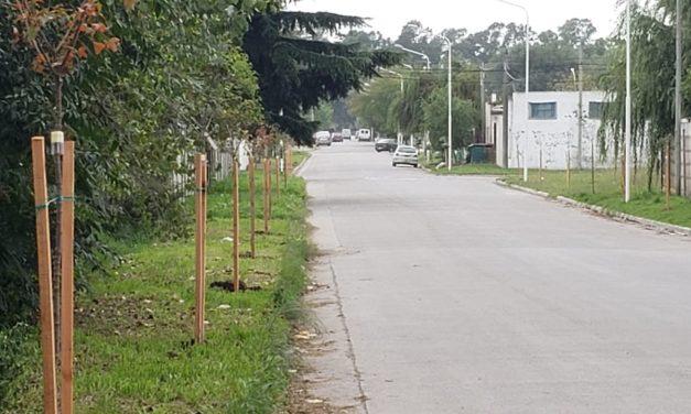 <span style='color:#e57026;font-size:15px;'>En el marco del Acuerdo del Bicentenario</span><br/><span></span><p/>Avanza la plantación de árboles en Villa Aguirre